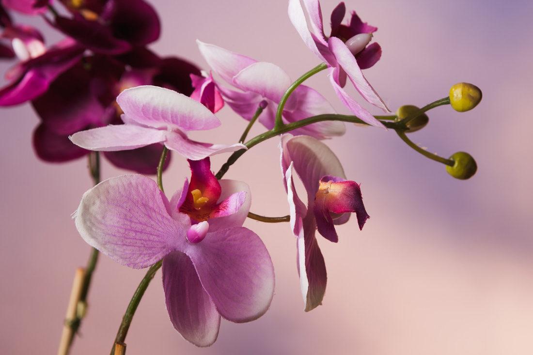 orchidee-phalaenopsis-pink-artfleur-seidenblumen kaufen