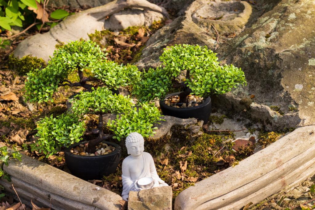 Bonsai Kleiner Baum Ganz Gross Pflanzensteckbrief Artfleur