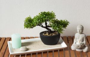 bonsai-zenbuddhismus-artfleur