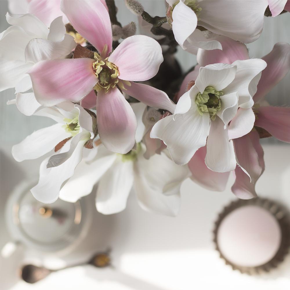 magnolie rosa weiss nahaufnahme artfleur
