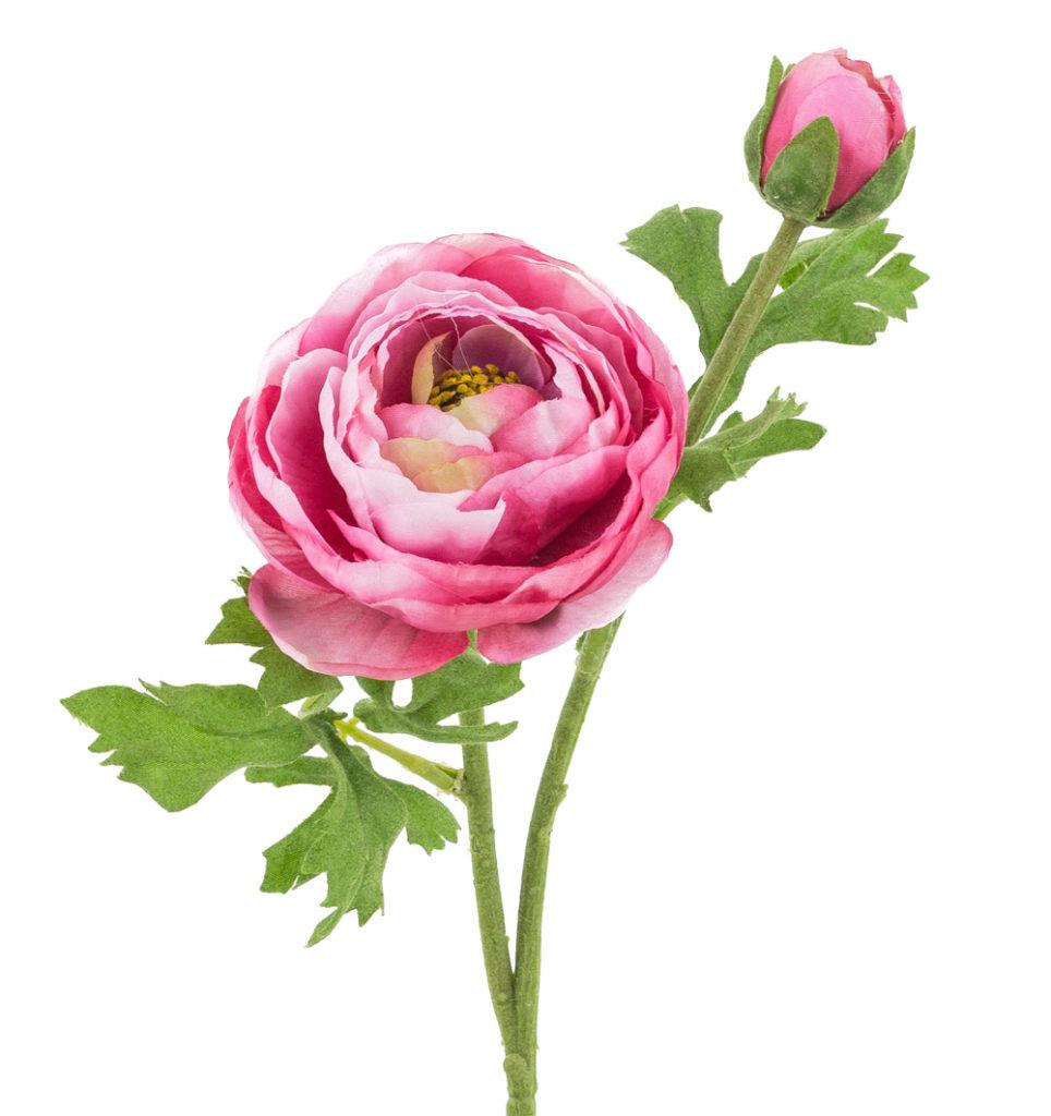 Atemberaubend Das Fröschlein unter den Blumen - die Ranunkel - artfleur &WE_11