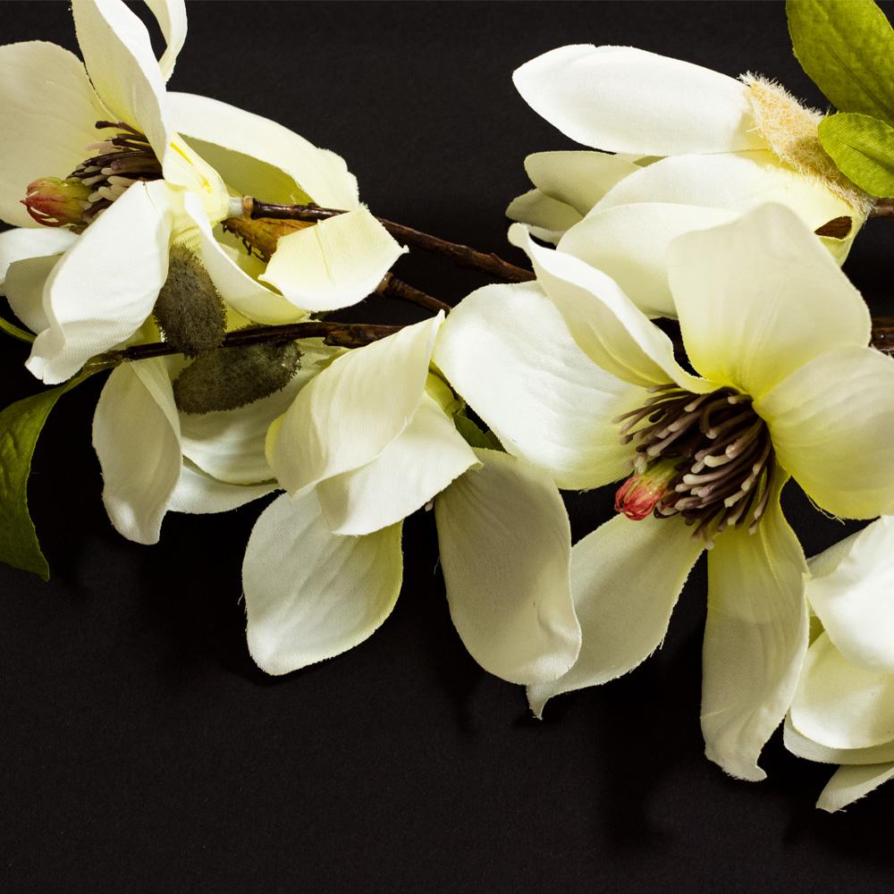 weisse-magnolie-quadratisch