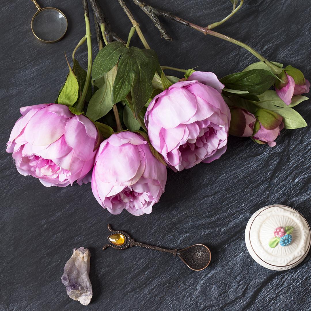 rosa-Paeonie-Schiefer-HG-quadratisch