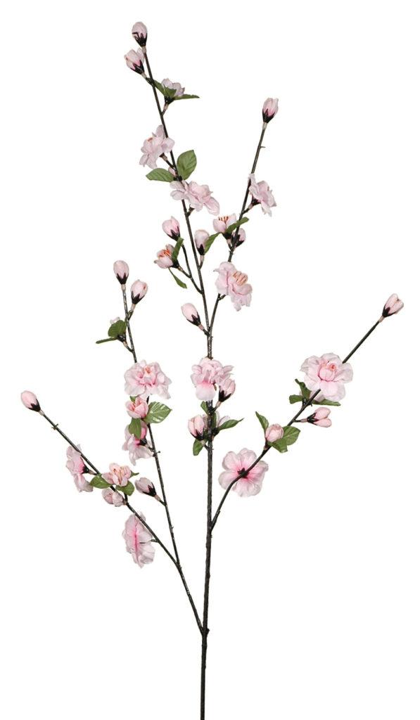 kirschblüte steckbrief
